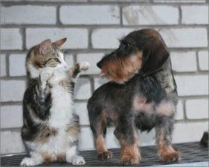 Котёнок встал в стойку перед собакой
