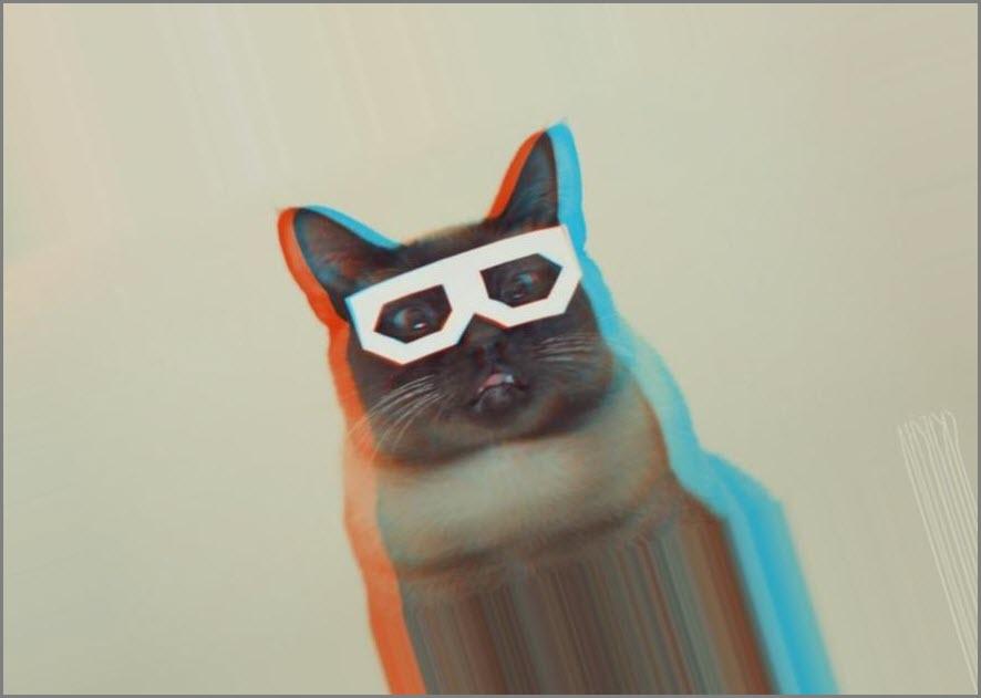 Опять кот