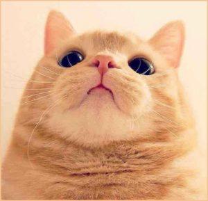 Картинка с котом на аву