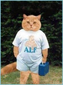 Смешной кот на аву 9