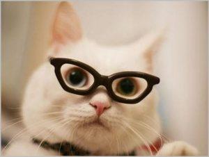 Фото на аву с учёным котом