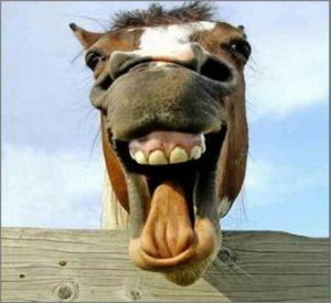 Лошадь на аву