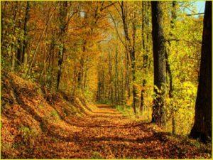 Красивый осенний лес