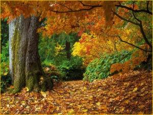 Яркий осенний лес