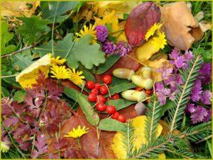 Ягоды и цветы