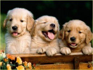 Смешные щенки