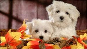 Хорошенькие щенки