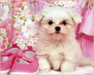 Кнопка щенок