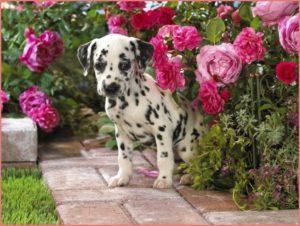 Прикольный щенок