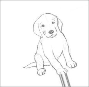 Картинка щенок