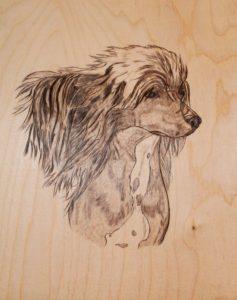 Картинка собачка