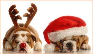 Собаки празднуют год собаки