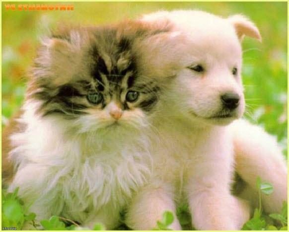 картинка кошка с собакой