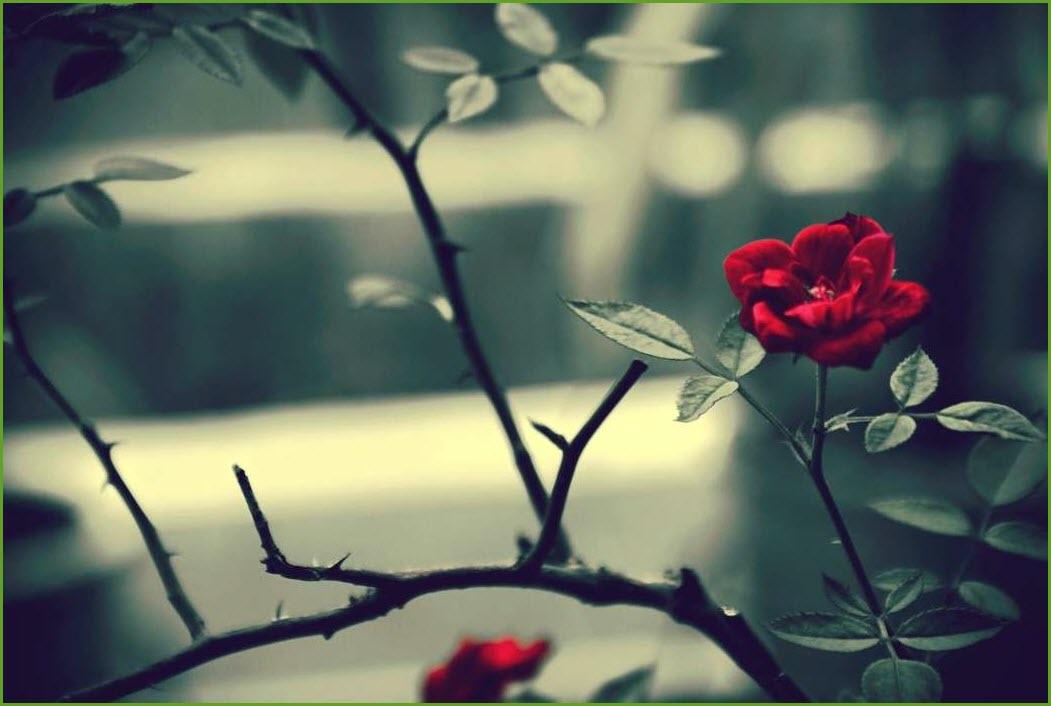 Цветы на ветках