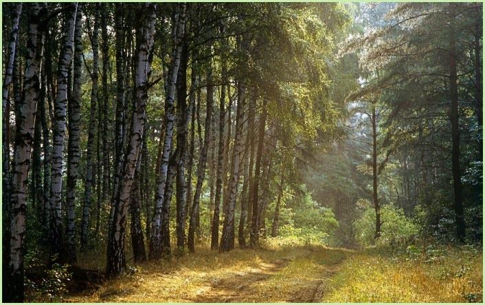 картинка на рабочий стол лес