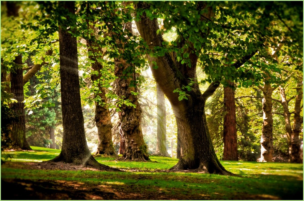 Рабочий стол лес