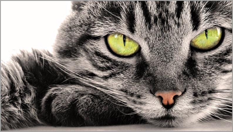 Обои котята