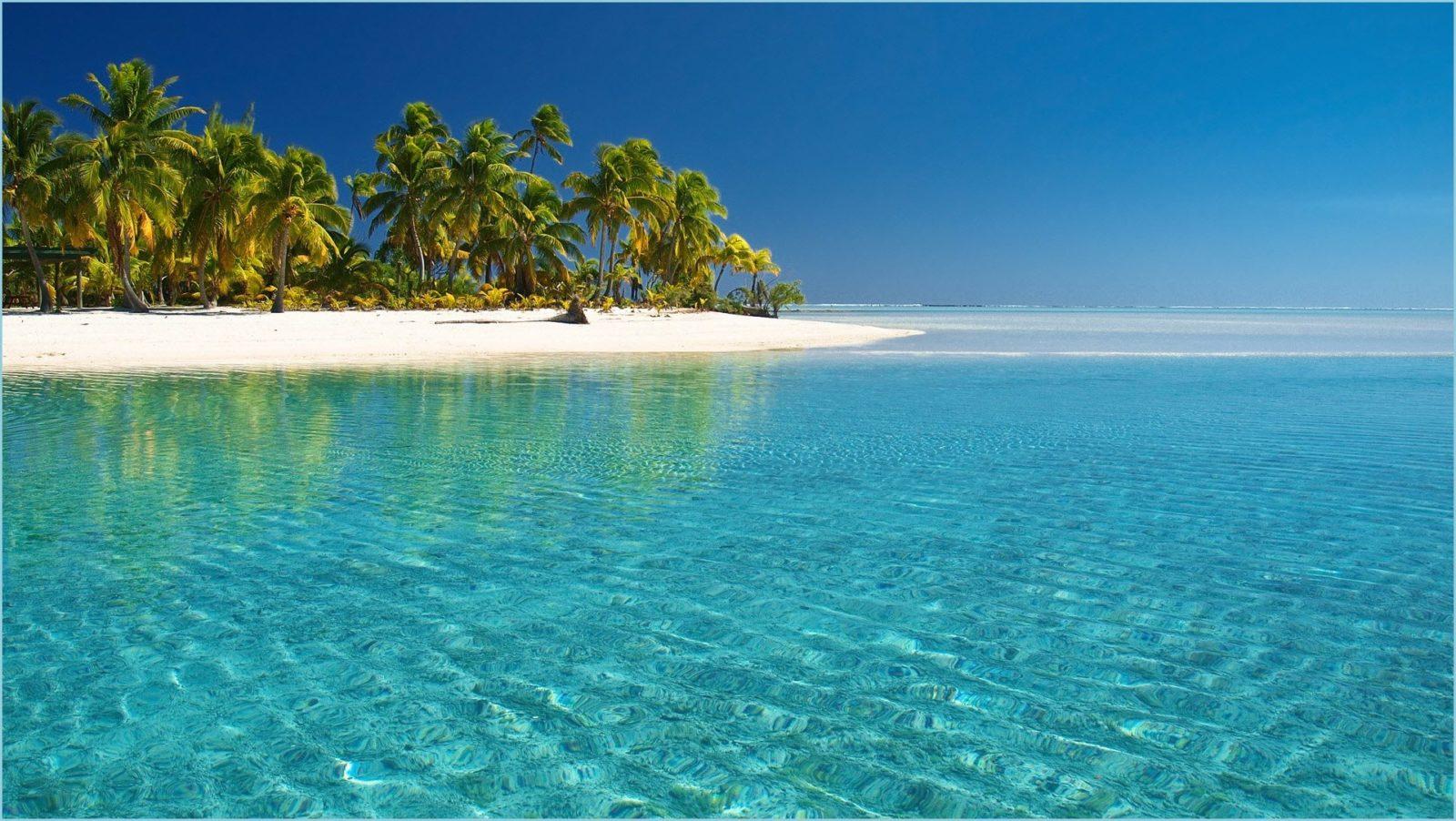 обои море палмы