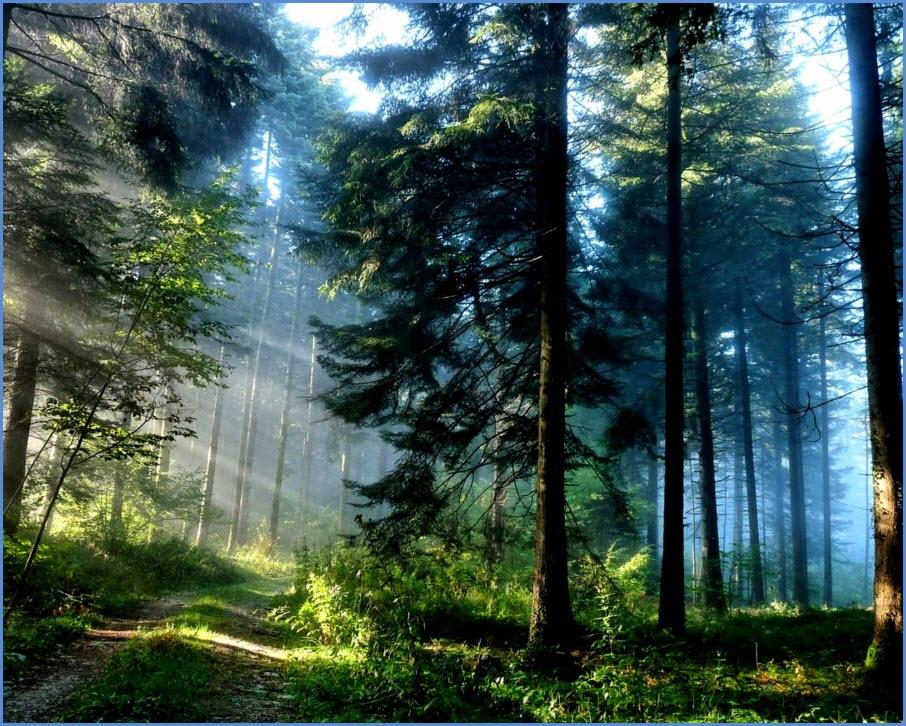 обои с лесом