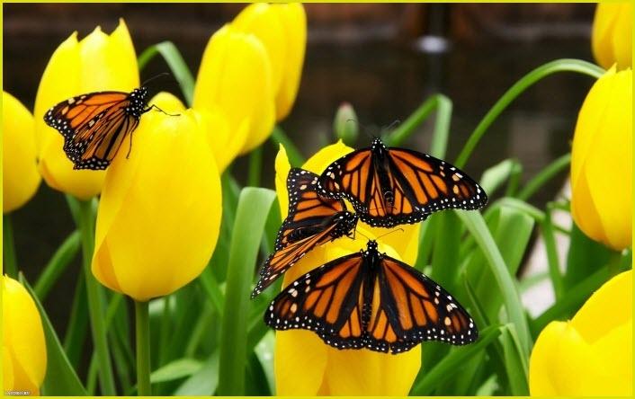 картинка на рабочий стол бабочки