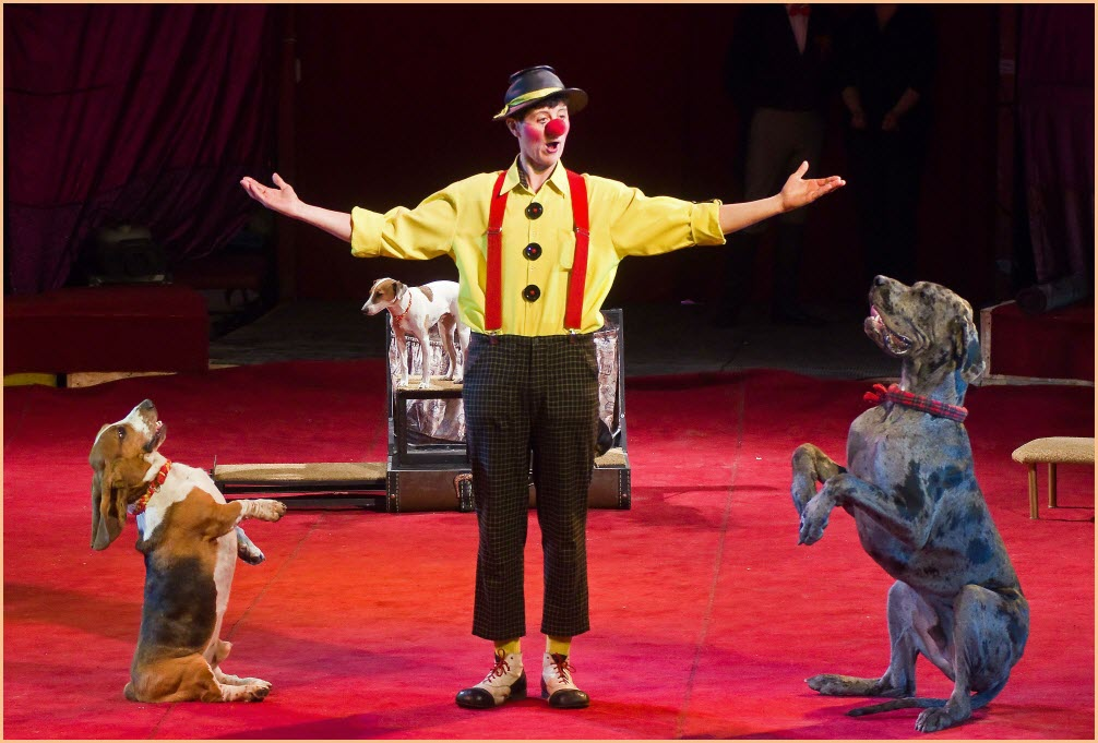 Собаки в цирке