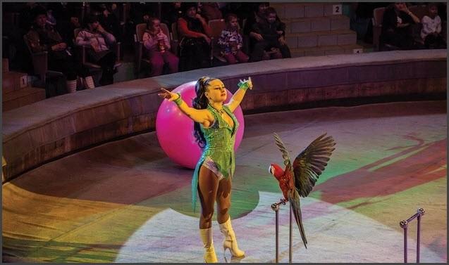 Попугай в цирке