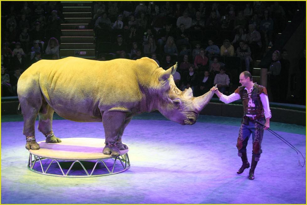 Носорог в цирке