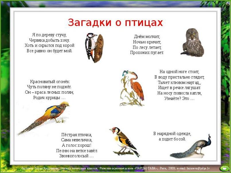 Загадка о птицах
