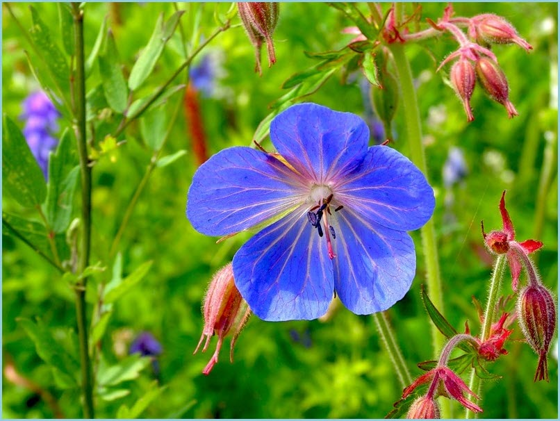 цветы часики