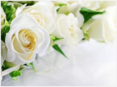 Картинка белые розы