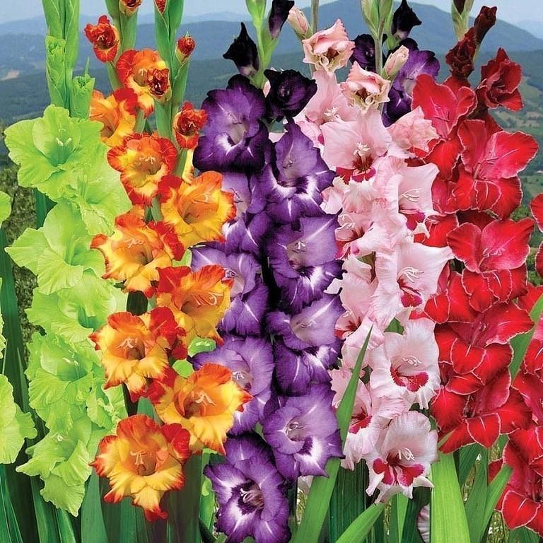 Картинки цветы   andrey-eltsov.ru