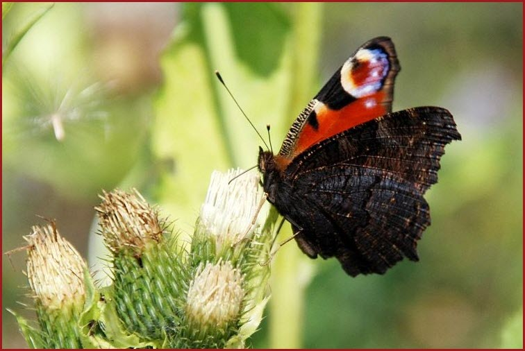 фото красивой бабочки
