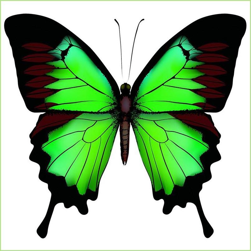картинка зелёная бабочка