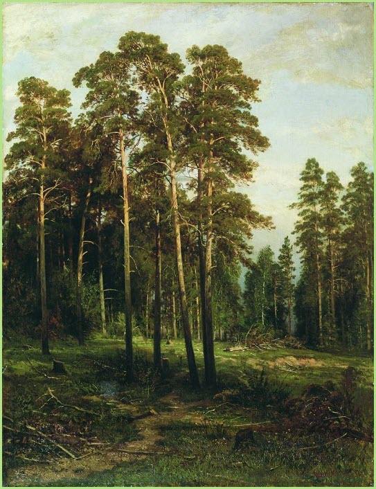 Сосновый лес картина