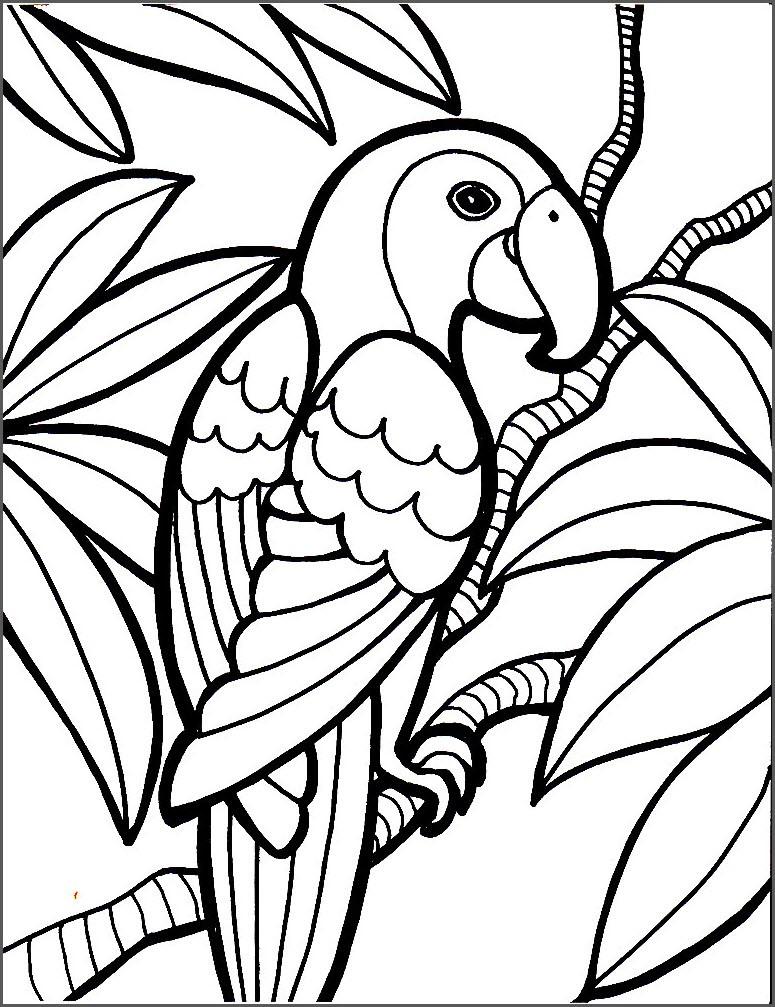 картинка попугай