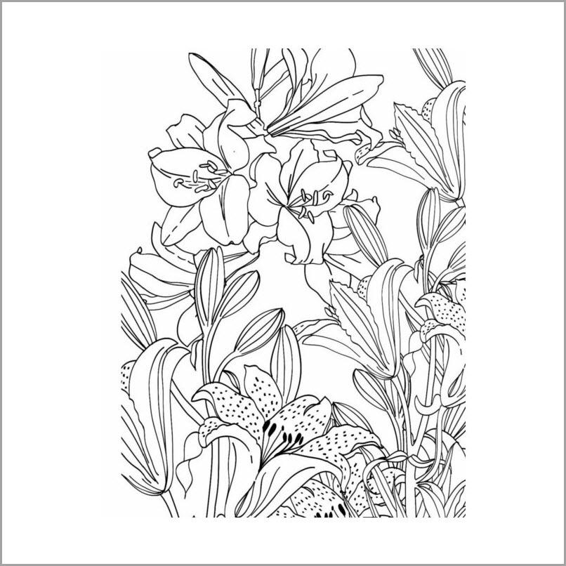 Раскраска лилии