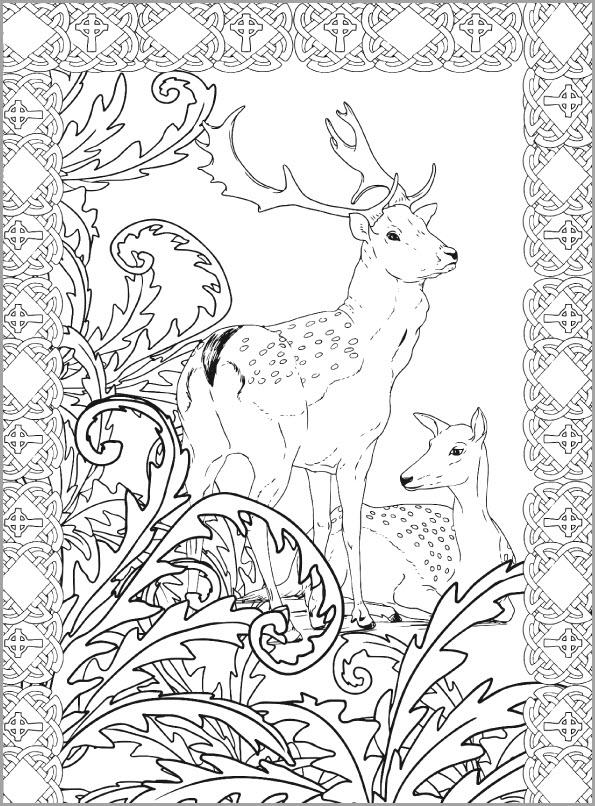 Раскраска олени