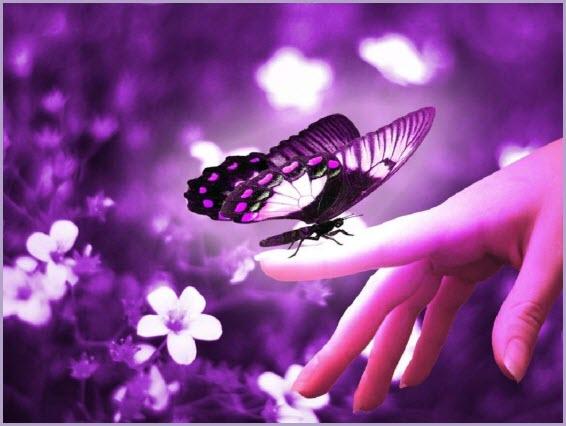 Аватарка бабочка