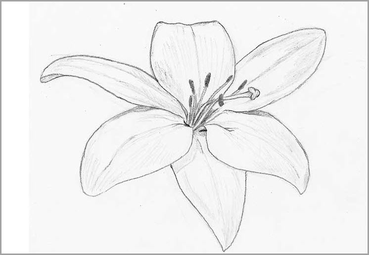 Цветок для срисовки