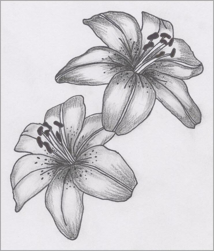 Лилии для срисовки