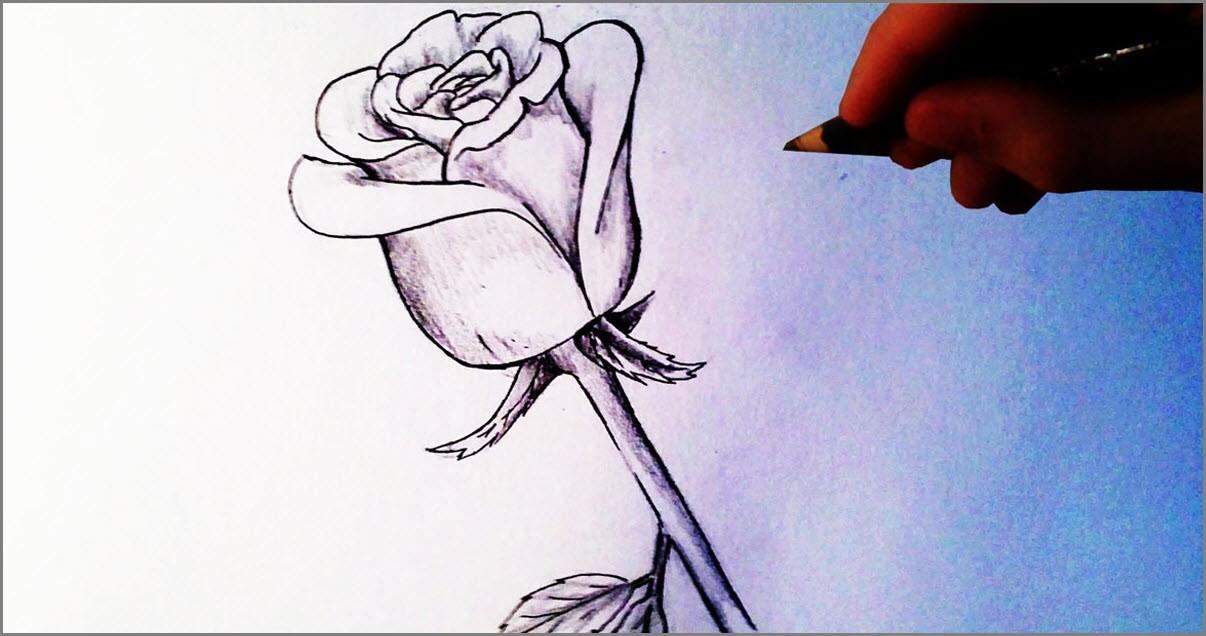Роза для срисовки