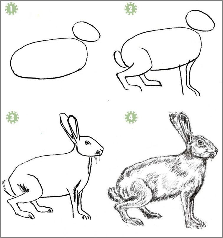Кролика поэтапно нарисовать