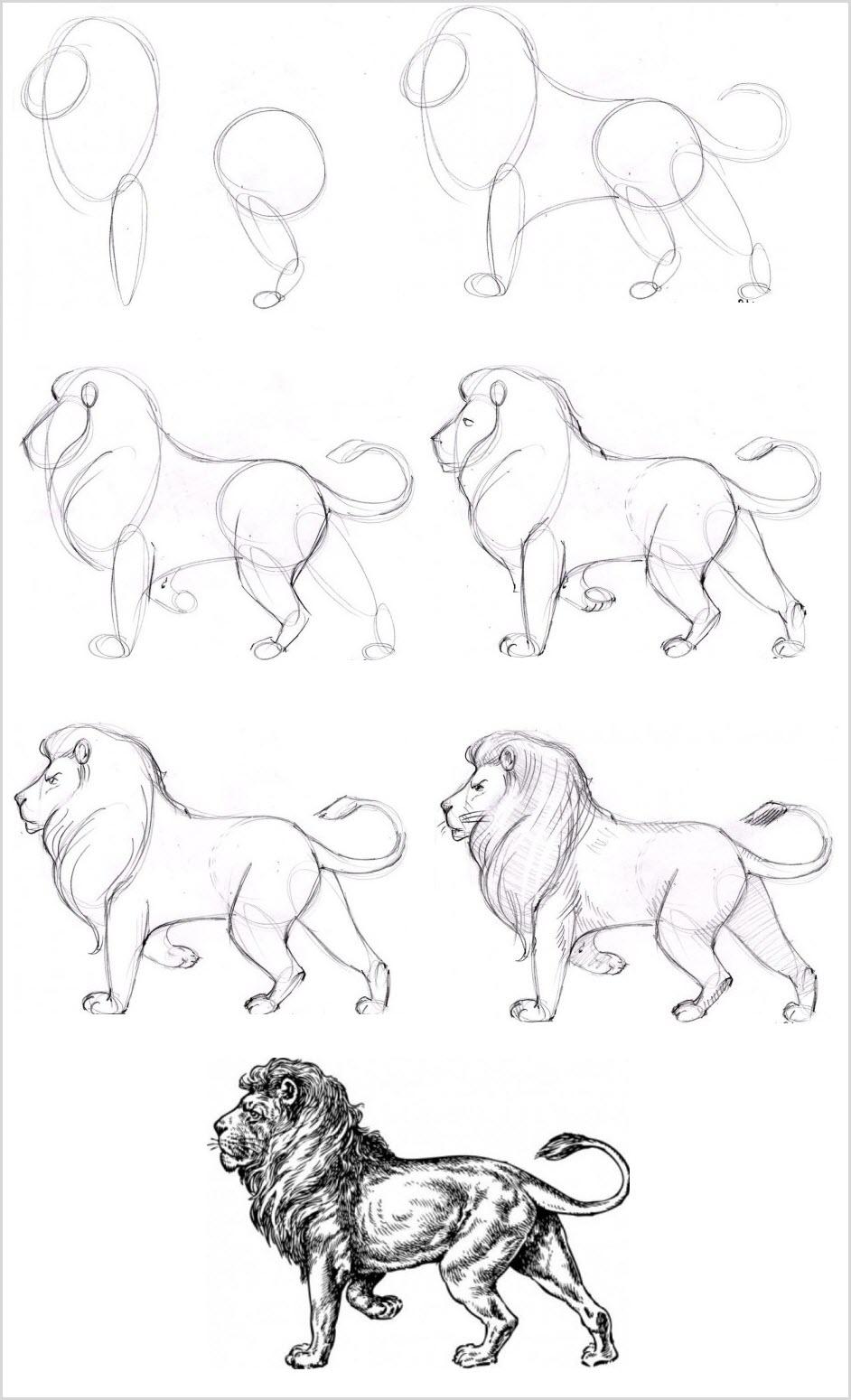 Льва поэтапно нарисовать