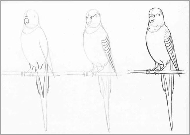 Попугая поэтапно нарисовать