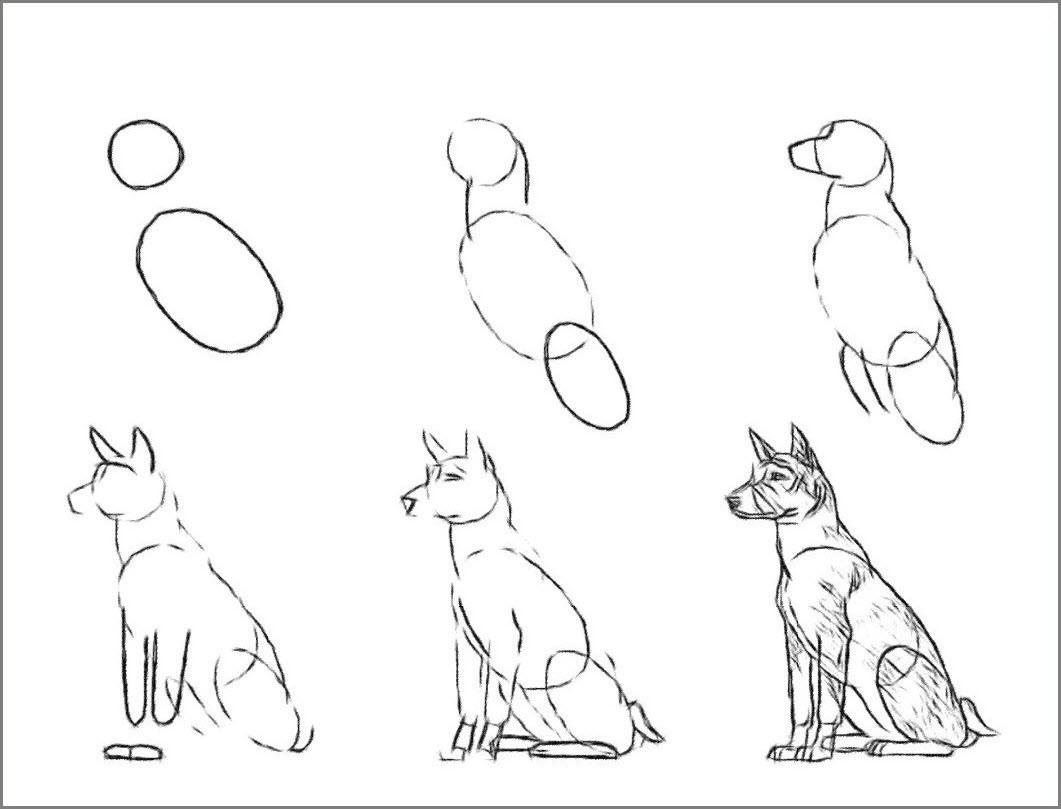 Собаку поэтапно нарисовать