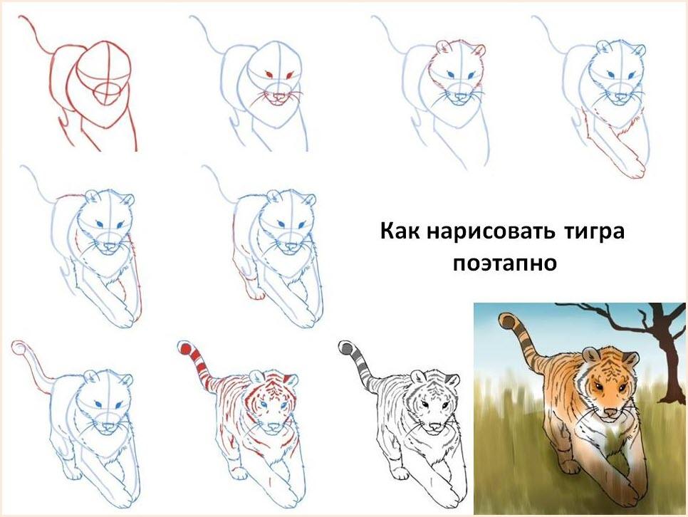 Тигра поэтапно нарисовать