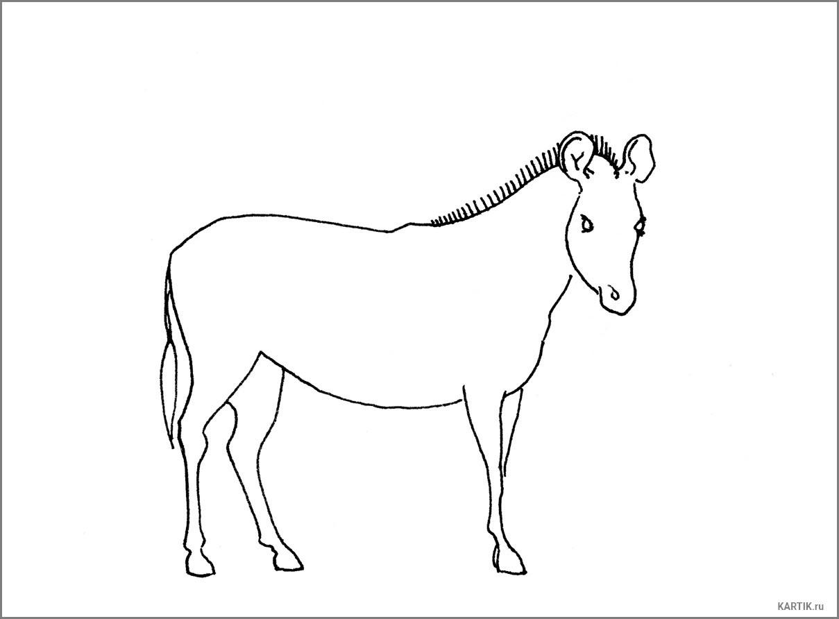 лошадь срисовка