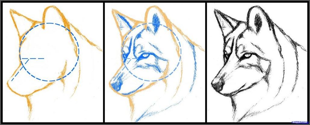 нарисовать волка поэтапно