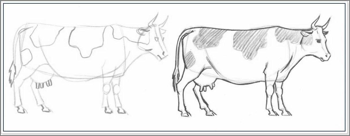 коровы рисунок