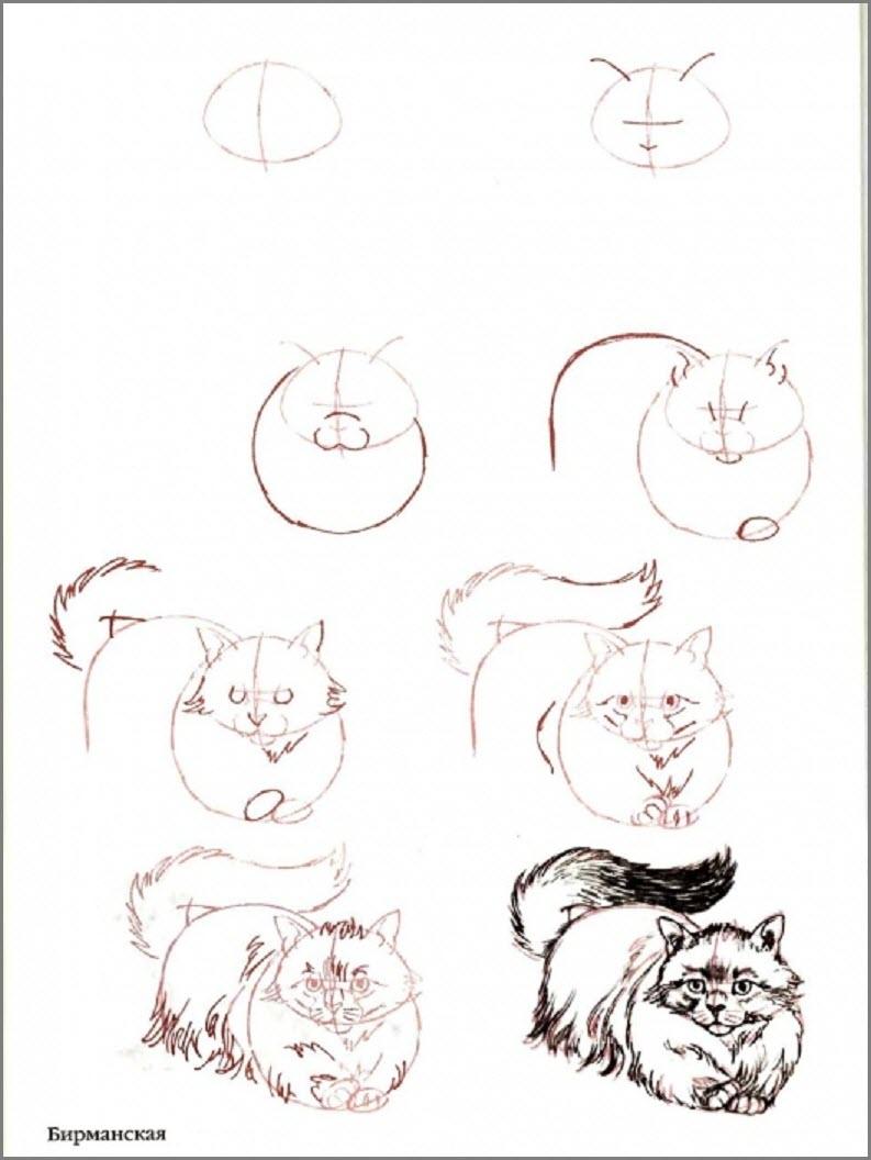 нарисовать поэтапно кошку карандошом